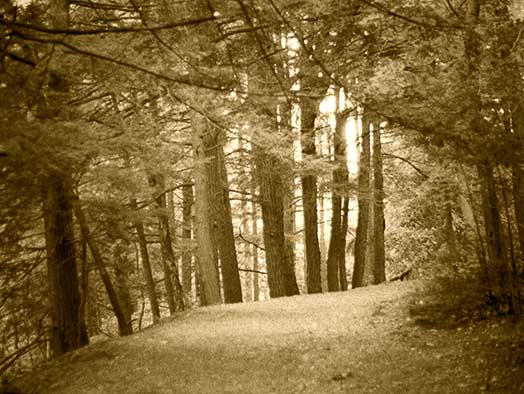 forest, woods, trees, B&W, fine art