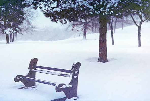 Snowstorm-Park-Bench, winter, snow, trees