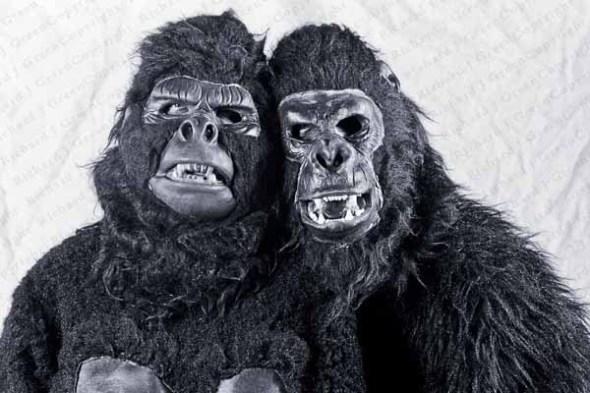 ape, apes, costume, halloween