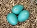 Bird-Nest-2