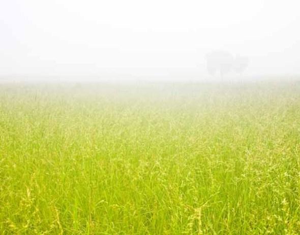 fog, foggy, mist, misty, field
