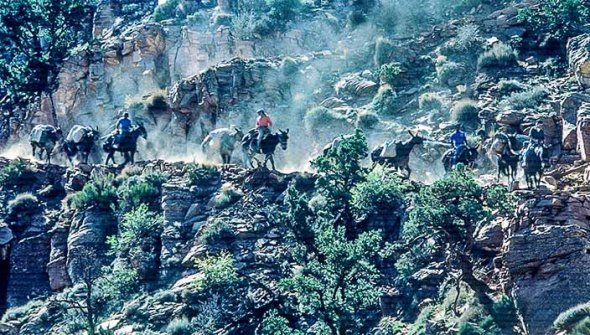 A Grand Canyon Trail and Donkeys.