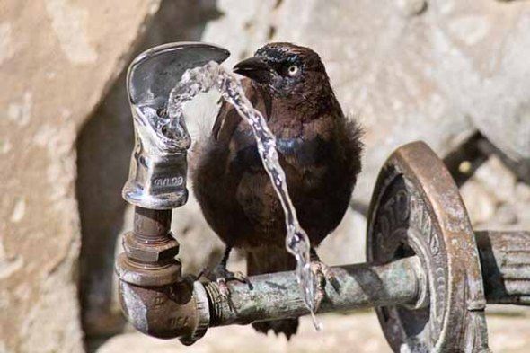 Water-Fountain-Bird