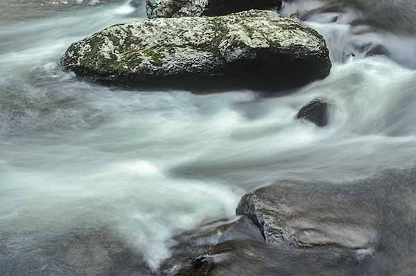 Creek, stream, water, forest, nature photography