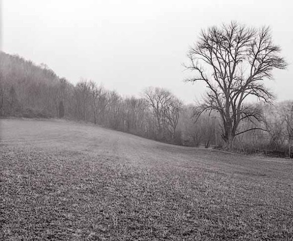 trees, field, solitude, b&w photography, fine art