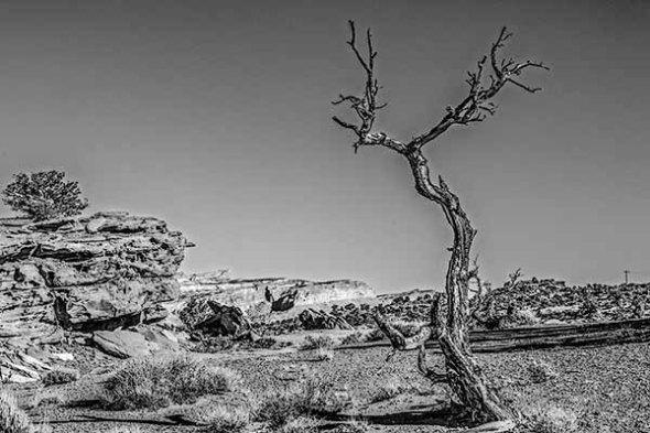 Capitol Reef National Park Utah Tree