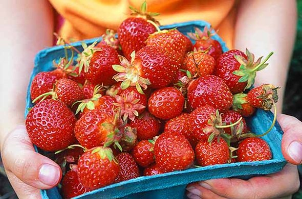 Strawberries, fruit