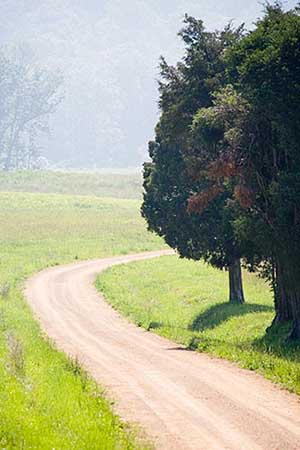 A tree on a dirt road.
