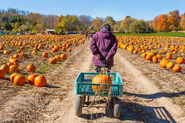 Pumpkin, autumn, fall