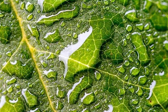 leaf, raindrop