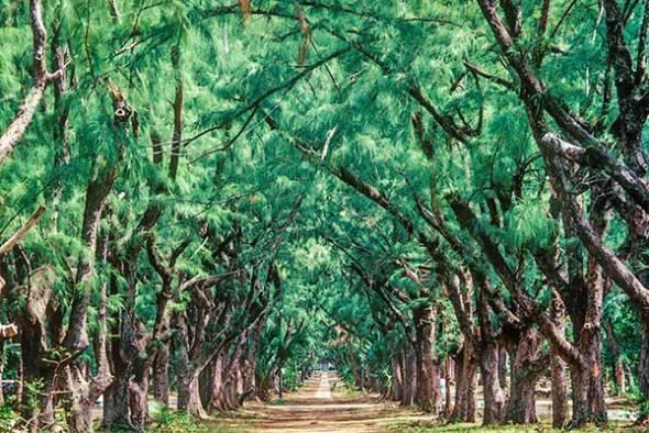 Trees, Bahamas