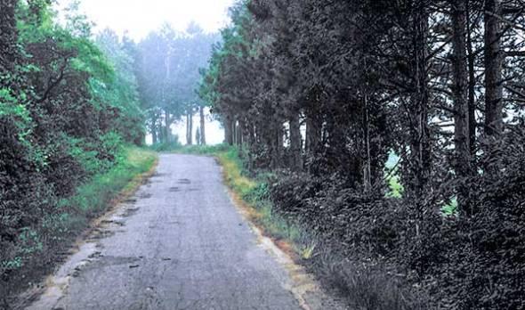 fog, trees, road