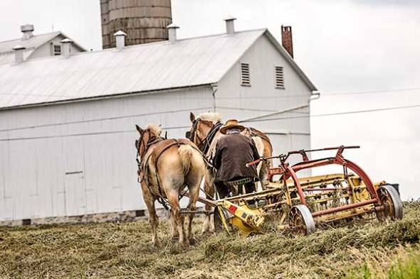 amish, farmer, farm, horses
