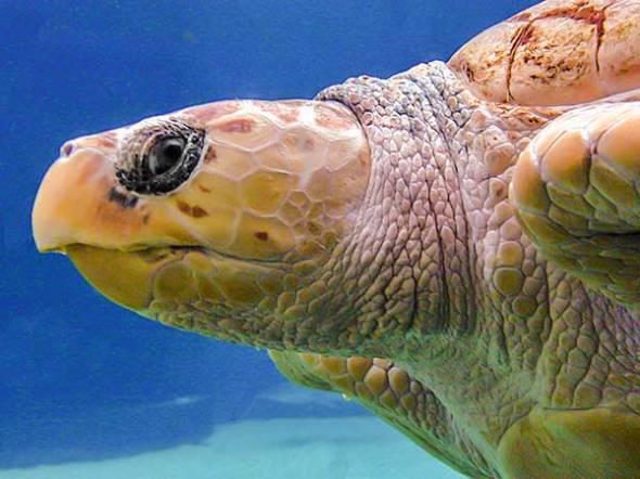 turtle, marine life