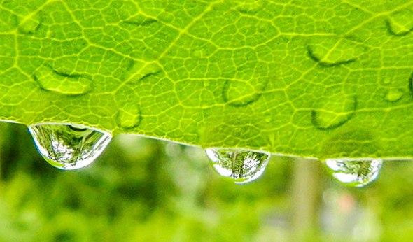 leaf, raindrops