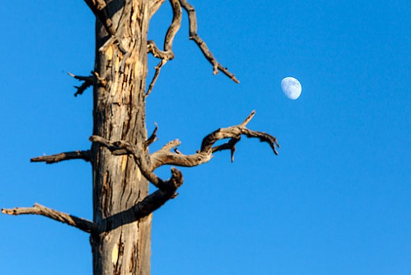 Tree, Moon, Blue Sky