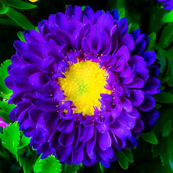 Flower, Macro photography, Purple