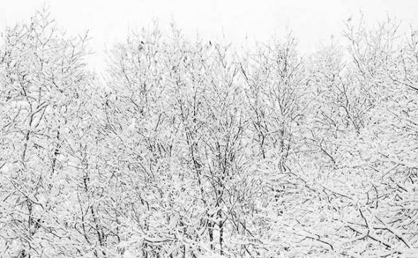 snow, winter, cold, trees, branches