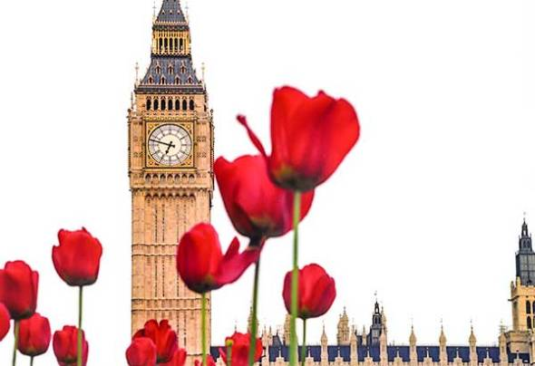 london, england, Great Britain, Parliament, Flowers, Tulips
