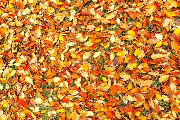 Autumn, Leaves, Fall, Color
