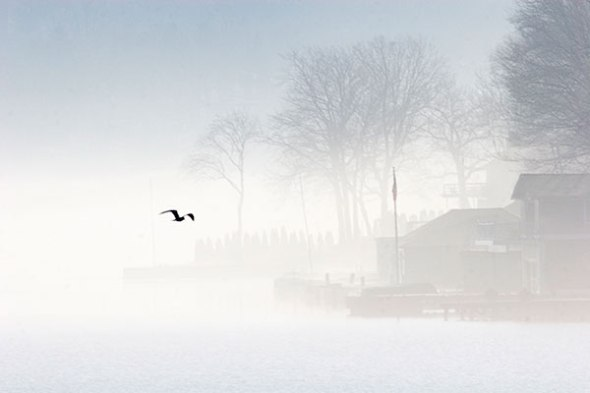 Fog, Lake, Bird