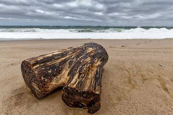 Race Point, Ocean, Beach, Cape Cod, Provincetown, Driftwood