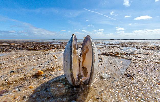 Provincetown, Cape Cod, Shore, Beach, Shellfish